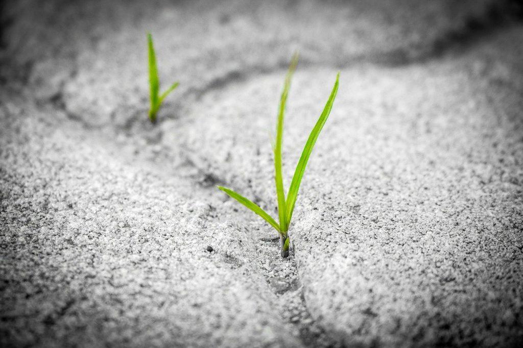 Drei grüne Grashalme wachsen aus einer Ritze eines grauen Gehwegs.